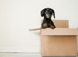 Should you tip movers?
